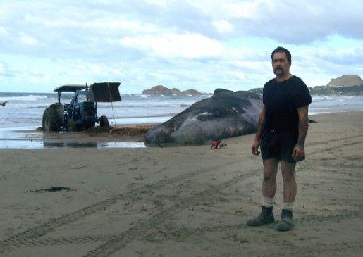 Neuseeland: ein Mann bei seinem verzweifelten Versuch, einen gestrandeten Wal zu retten ...