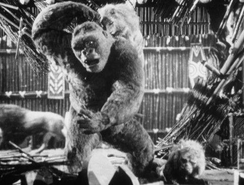 Gorilla Joe verbreitet nach seiner Flucht Angst und Schrecken