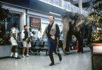 Die dickhäutige Vera folgt Jack (Bill Murray) auf Schritt und Tritt