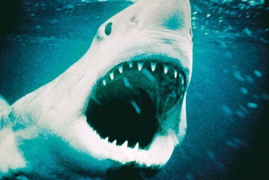 Der Weisse Hai Trailer Kritik Bilder Und Infos Zum Film