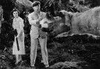 Recht großes Händchen! Denham (Robert Armstrong) und Hilda (Helen Mack) begrüßen King Kong Junior