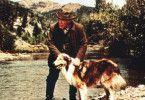 MacLure (Edmund Gwenn) mit der treuen Hündin Lassie