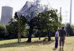 Die Kirschbäume müssen natürlich vor der Kraftwerks-Asche geschützt werden