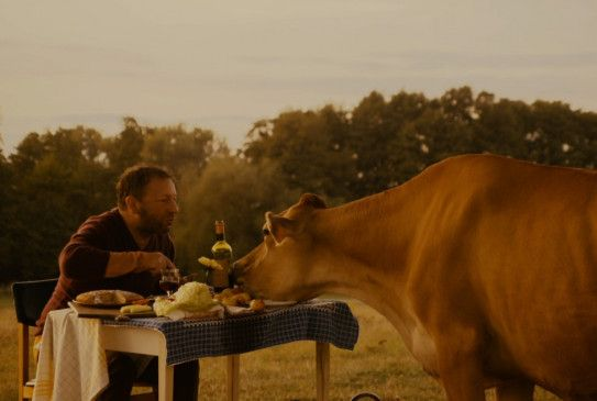Neue Liebe? Zbigniew Zamachowski und seine Kuh