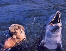 Du hast doch heute schon drei Kilo Fisch gegessen!  Luke Halpin mit seinem Delfin