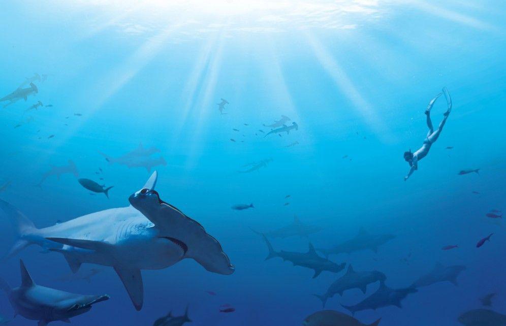 Ein Hammer - dieser Hai!