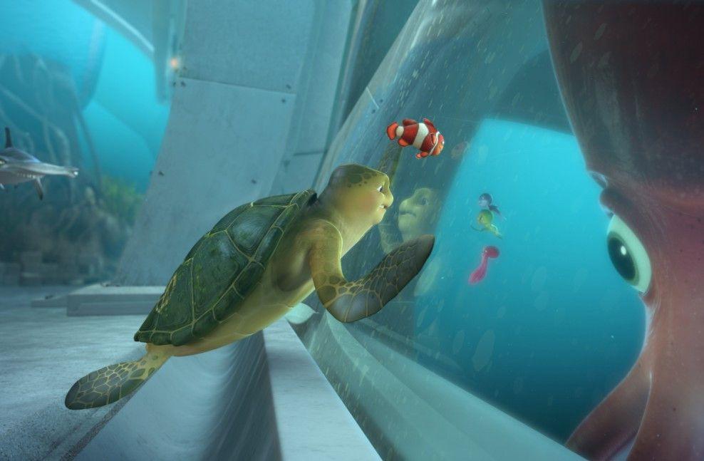Wieder unterwegs: Schildkröte Sammy