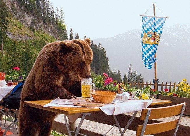 Bär Bruno lässt es sich auf der menschenleeren Terrasse so richtig gut gehen ...