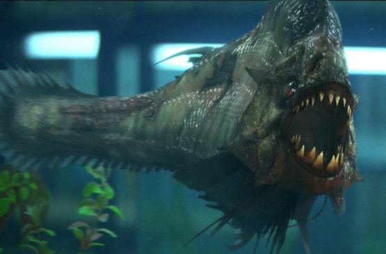 Der Piranha wartet schon auf das nächste Opfer ...