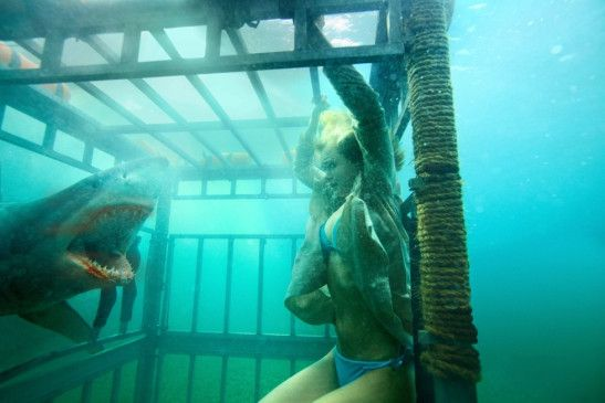Gefahr unter Wasser - ein Mörderhai greift an