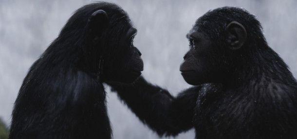 Die Affen sind herausragend animiert.