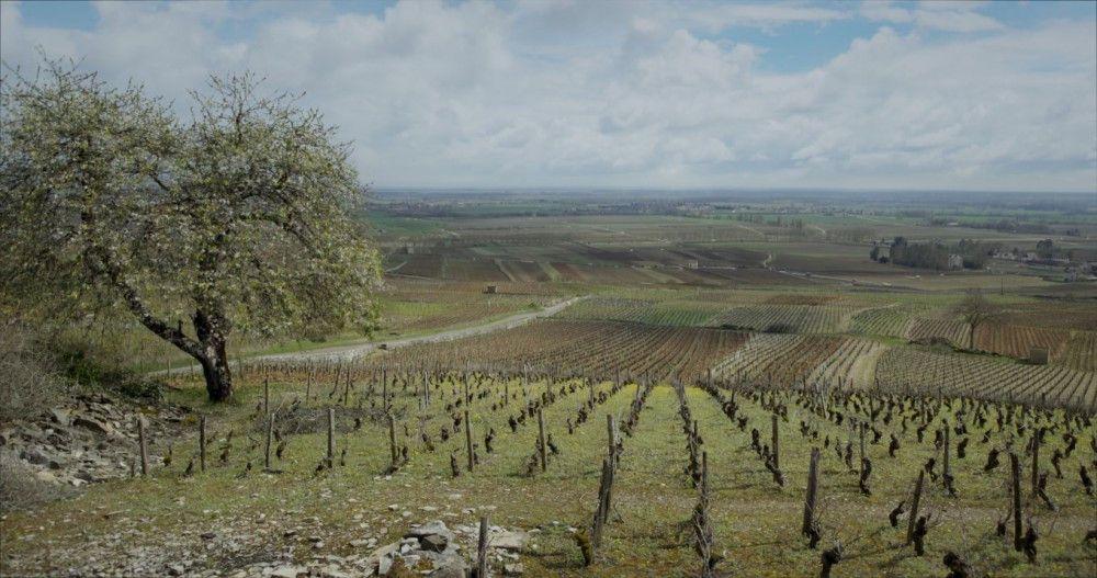 Ein schöner Ausblick, aber hart zu bearbeiten: Das Weingut, das sie nun geerbt haben, stellt Jean, Jérémie und Juliette vor große Herausforderungen.