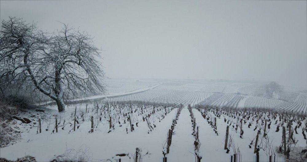"""Bild 11 zu """"Der Wein und der Wind"""""""