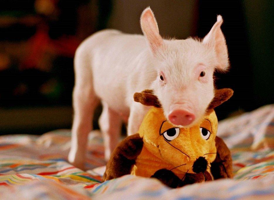Und noch ein Rennschwein...