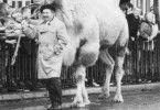 Was von beiden ist denn das Kamel? Jerzy Stuhr und  sein Haustier