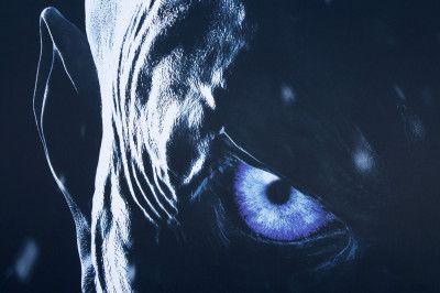 Game of Thrones: Sendetermine, Schauspieler und News zu GoT