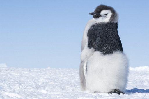 """Motiv aus """"Die Reise der Pinguine 2"""""""