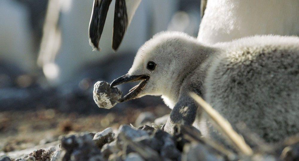 """Wie in jeder guten Tier-Dokumentation gehören natürlich auch in """"Unsere Erde 2"""" wunderbare Aufnahmen von Jungtieren dazu."""
