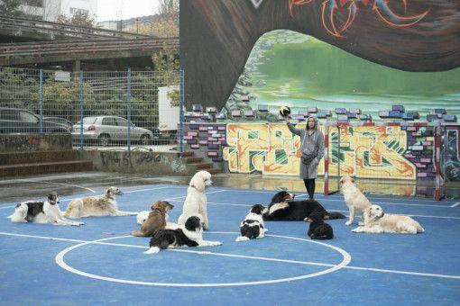 Ex-Profifußballer Oli (Frederick Lau) entdeckt eine neue Leidenschaft für sich: Hundefußball.