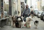 Oli (Frederick Lau) begreift, dass er als Dogwalker eine Menge Geld verdienen kann.