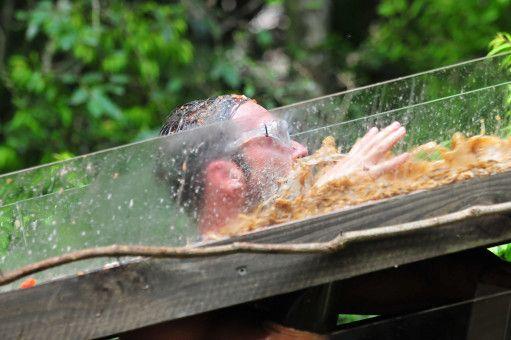 Dschungelcamp 2019 – Tag 6: Bastian versagt in der Dschungelprüfung