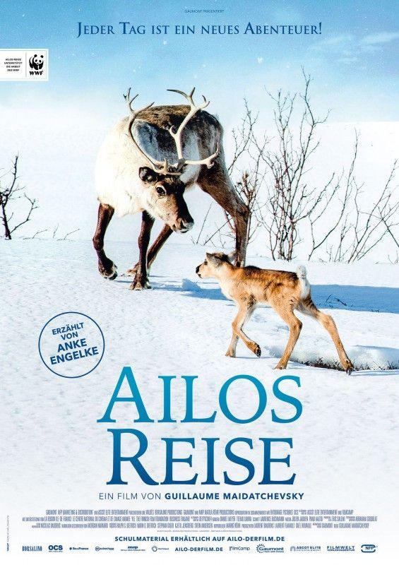 """Im winterlichen Lappland muss Rentier Ailo lernen zu überleben. Die Dokumentation """"Ailos Reise"""" begleitet ihn in  seinen ersten Lebensjahren."""