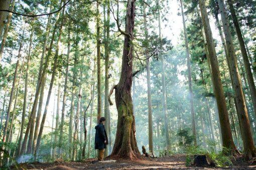 Naomi Kawase findet viele schöne Bilder für ihre Geschichte vom Werden und Vergehen. Der Mensch wird da im Vergleich schon mal sehr klein.