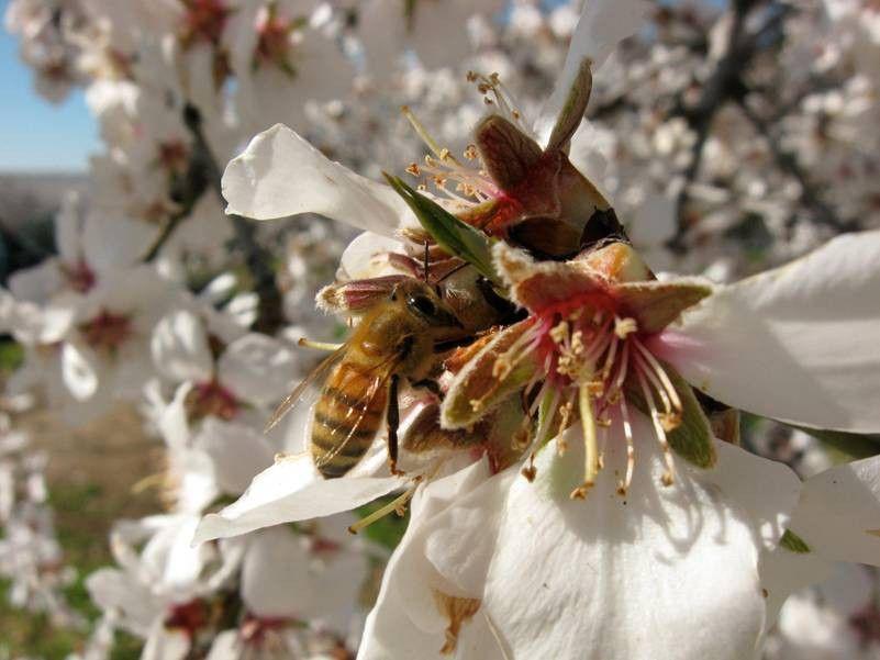 More Than Honey - Bitterer Honig