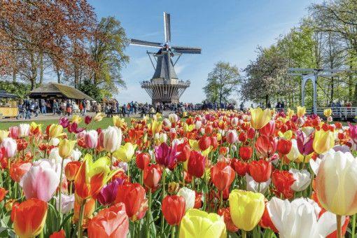 """Sinnliche Inspiration: Frisch und farbenfroh zeigt sich der Keukenhof, der 2019 seinen 70. Geburtstag feiert und im Zeichen von """"Flower Power"""" steht."""