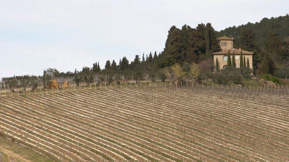 Auch Wein gehört zu den Lebensmitteln, die häufig gefälscht werden.