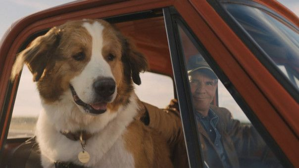 Bailey lässt sich den Wind um die Nase wehen und dreht mit Kumpel Ethan (Dennis Quaid) eine Runde.