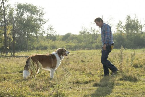 Hund Bailey und Herrchen Ethan (Dennis Quaid) üben immer noch ihre alten Tricks.
