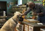 """Bei seiner zweiten Reinkarnation kehrt Bailey als Boerboel """"Big Dog"""" zurück und begegnet seiner CJ nur einmal kurz."""
