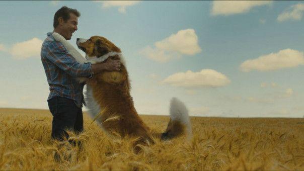 Eine ganz besondere Freundschaft zwischen Mensch (Dennis Quaid) und Hund.