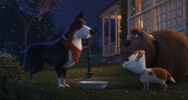 Hütehund Rooster (links) erteilt Max (vorne) und Duke eine Lektion in Sachen Würde.