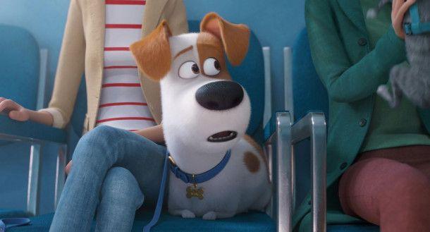 Beim Tier-Verhaltenstherapeuten begegnet Max schreiend komischen, neurotischen Haustieren.