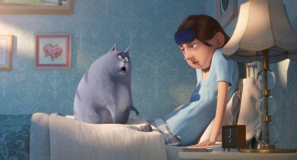 Chloe tut, was Katzen eben so tun müssen, zum Beispiel ihrem Frauchen die Bettdecke vollzukotzen.
