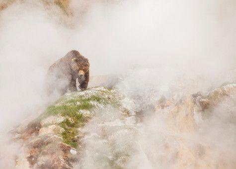 Ein Braunbär im Nebel.