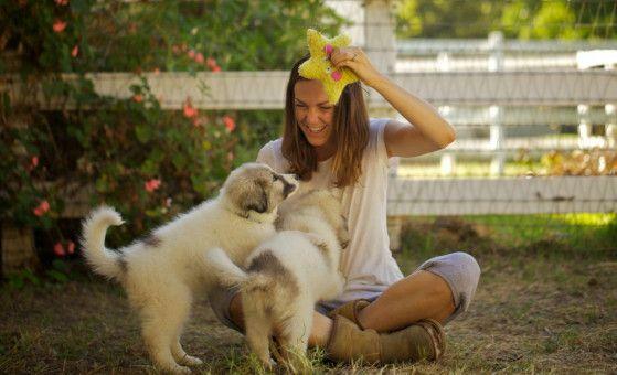 Molly Chester spielt mit dem Hütehunde-Nachwuchs. Noch sind sie klein und niedlich ...