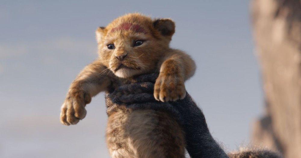 Simba, der zukünftige König der Löwen, wird seinem Volk präsentiert.