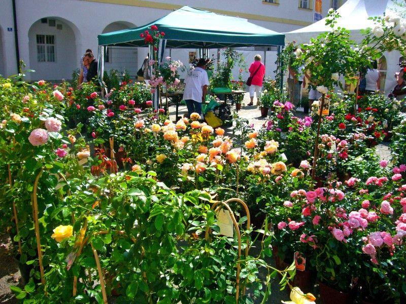 Die Gartenmesse findet in Aldersbach statt.