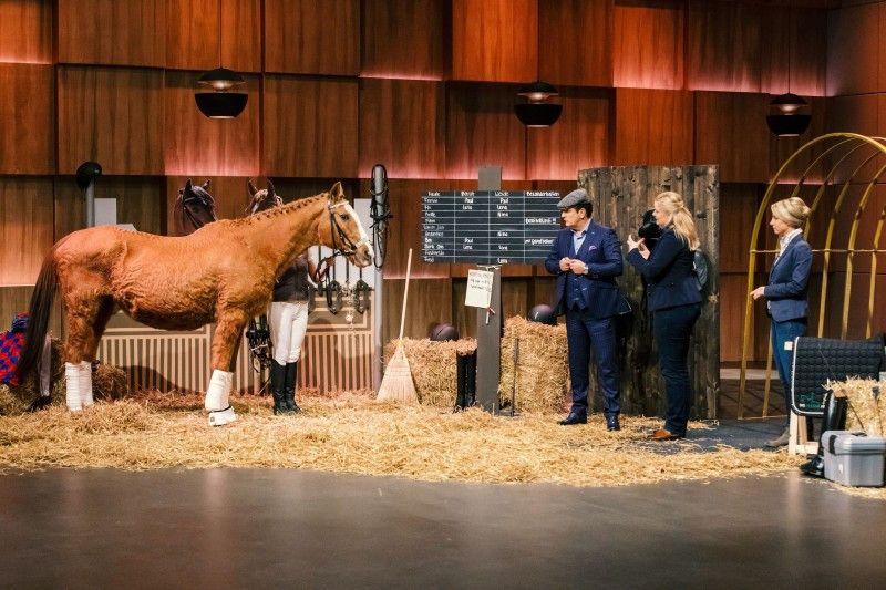 """<b>Folge 7:</b> Christina Terbille und Sarah Wendlandt haben ihre """"Pferde App"""" mitgebracht. Sie soll alle Prozesse in einem Pferdebetrieb sinnvoll steuern und das Stallmanagement einfacher machen."""