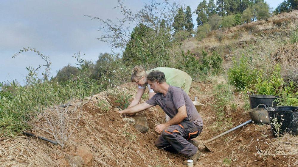 Barbara und Erich Graf haben ein Ziel: Sie wollen ein Stück Ödland auf La Palma wieder fruchtbar machen.