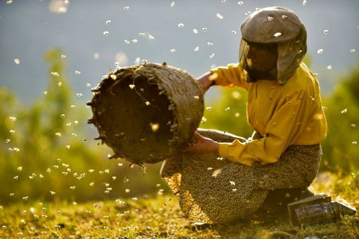 Die Imkerin Hatidze kümmert sich liebevoll um ihre Bienenvölker.