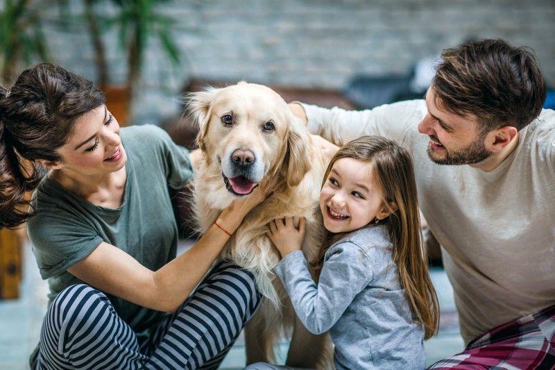 Eine aktuelle Studie zeigt: Hunde machen glücklich. Aber passen sie auch