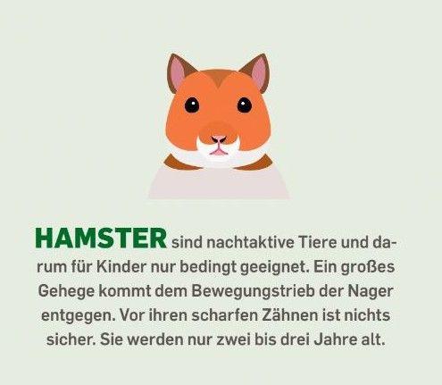 Hamster sind nachtaktive Tiere und darum für Kinder nur bedingt geeignet. Ein großes Gehege kommt dem Bewegungstrieb der Nager entgegen. Vor ihren scharfen Zähnen ist nichts sicher. Sie werden nur zwei bis drei Jahre alt.