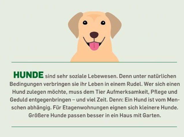 Hunde sind sehr soziale Lebewesen. Denn unter natürlichen Bedingungen verbringen sie ihr Leben in einem Rudel. Wer sich einen Hund zulegen möchte, muss dem Tier Aufmerksamkeit, Pflege und Geduld entgegenbringen – und viel Zeit. Denn: Ein Hund ist vom Menschen abhängig. Für Etagenwohnungen eignen sich kleinere Hunde. Größere Hunde passen besser in ein Haus mit Garten.