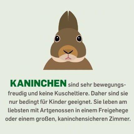 Kaninchen sind sehr bewegungsfreudig und keine Kuscheltiere. Daher sind sie nur bedingt für Kinder geeignet. Sie leben am liebsten mit Artgenossen in einem Freigehege oder einem großen, kaninchensicheren Zimmer.