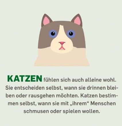 """Katzen fühlen sich auch alleine wohl. Sie entscheiden selbst, wann sie drinnen bleiben oder rausgehen möchten. Katzen bestimmen selbst, wann sie mit """"ihrem"""" Menschen schmusen oder spielen wollen."""