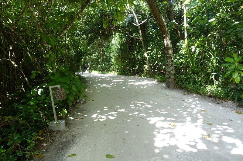 Wie in einem Regenwald fühlt man sich auf Vakkaru Maldives – solange man auf solchen Wegen bleibt. Biegt man ab, findet man sich schnell am Strand wieder.